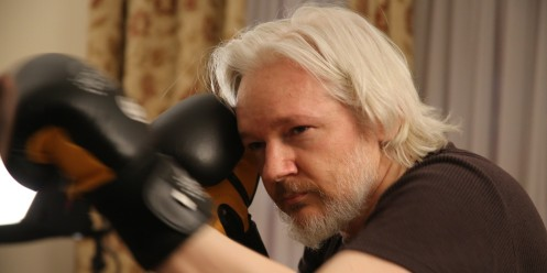 o-JULIAN-ASSANGE-BOXING-facebook